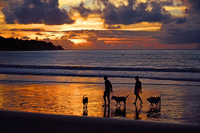 Pet friendly holiday cottages in Wales